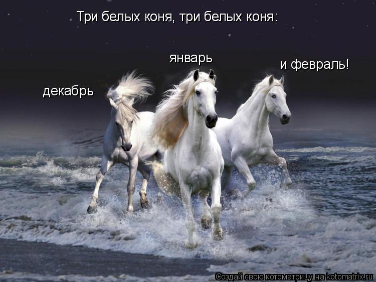 Котоматрица: Три белых коня, три белых коня: декабрь Три белых коня, три белых коня: январь и февраль!
