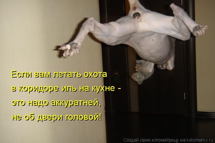 Котоматрица: Если вам летать охота в коридоре иль на кухне - это надо аккуратней, не об двери головой!