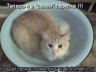 """Котоматрица: Теперь я в """"своей"""" тарелке !!!"""