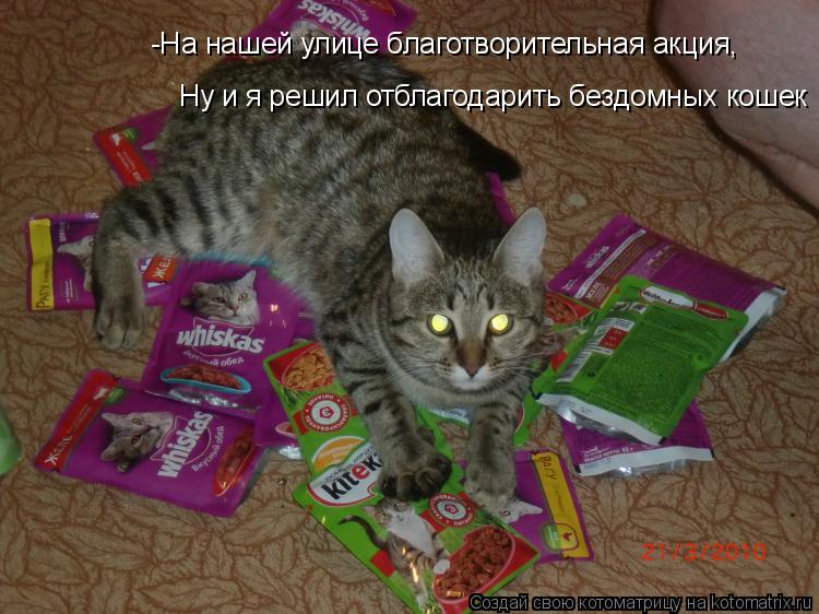 Котоматрица: -На нашей улице благотворительная акция, Ну и я решил отблагодарить бездомных кошек