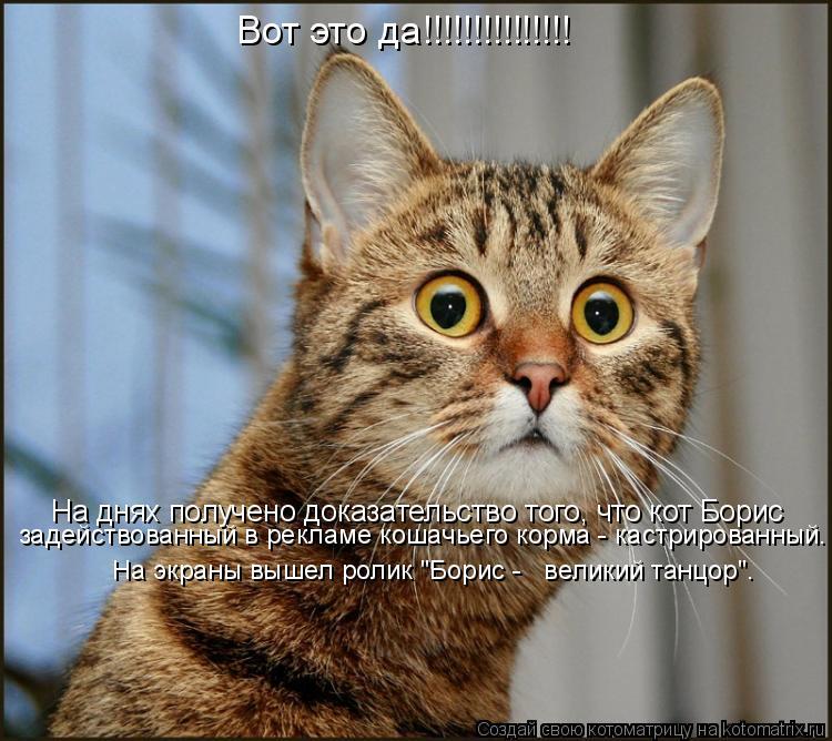 Котоматрица: Вот это да!!!!!!!!!!!!!!! На днях получено доказательство того, что кот Борис задействованный в рекламе кошачьего корма - кастрированный.  На экра