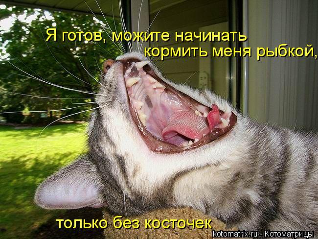 Котоматрица: Я готов, можите начинать  кормить меня рыбкой,  только без косточек