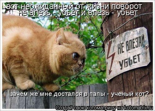 Котоматрица: вот неожиданный от жизни поворот не влезь - убьет и влезь - убьет зачем же мне достался в папы - ученый кот?
