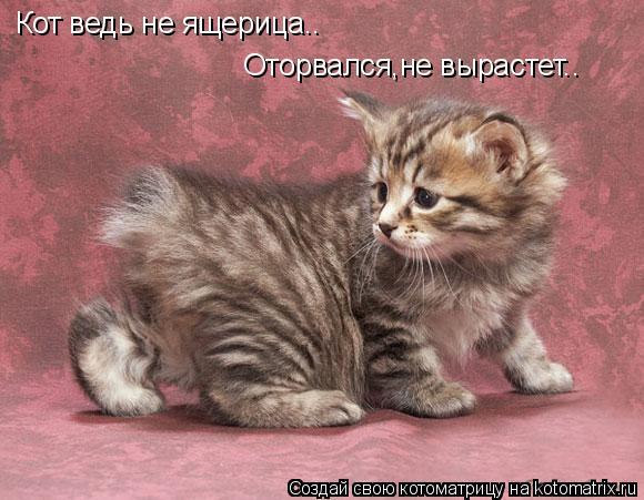 Котоматрица: Кот ведь не ящерица.. Оторвался,не вырастет..