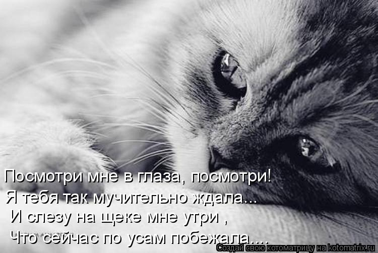 Котоматрица: Посмотри мне в глаза, посмотри! Я тебя так мучительно ждала... И слезу на щеке мне утри , Что сейчас по усам побежала....