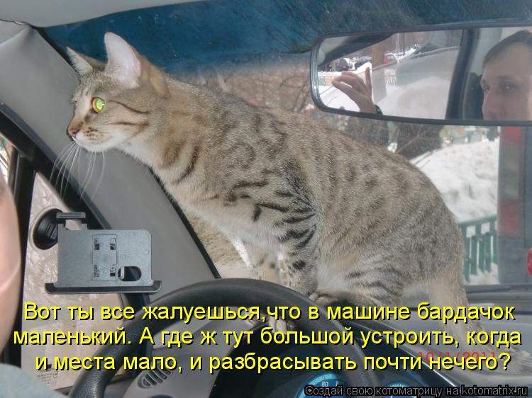 Котоматрица - Вот ты все жалуешься,что в машине бардачок маленький. А где ж тут боль