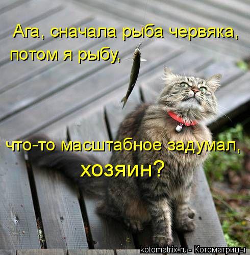 http://kotomatrix.ru/images/lolz/2011/05/21/913128.jpg