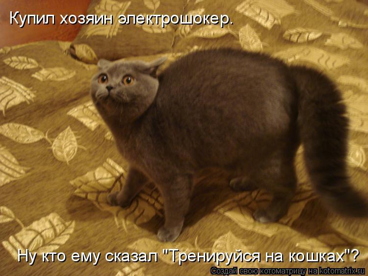 """Котоматрица: Купил хозяин электрошокер. Ну кто ему сказал """"Тренируйся на кошках""""?"""