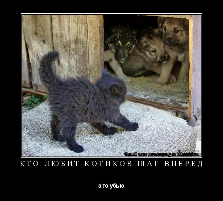 Котоматрица: кто любит котиков шаг вперед а то убью
