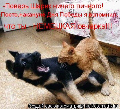 Котоматрица: -Поверь Шарик ничего личного! Посто,накануне Дня Победы я вспомнил, что ты - НЕМЕЦКАЯ овчарка!!!