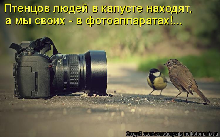 Котоматрица: Птенцов людей в капусте находят, а мы своих - в фотоаппаратах!...