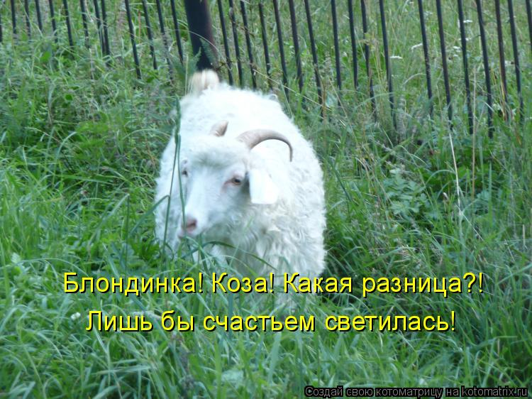 Котоматрица: Блондинка! Коза! Какая разница?! Лишь бы счастьем светилась!