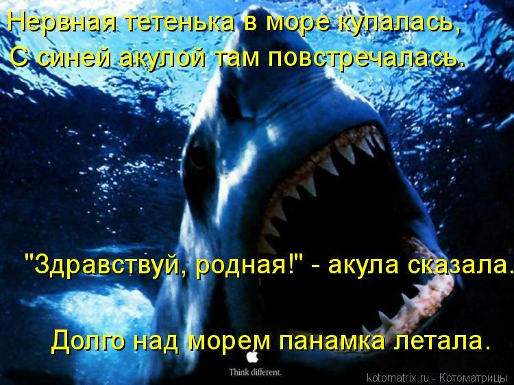 """Котоматрица: Нервная тетенька в море купалась,  С синей акулой там повстречалась. """"Здравствуй, родная!"""" - акула сказала. Долго над морем панамка летала."""