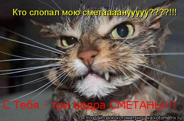 Котоматрица: Кто слопал мою сметаааанууууу????!!! С Тебя - три ведра СМЕТАНЫ!!!