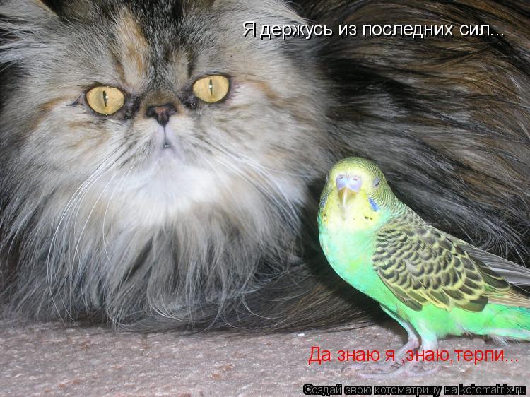 http://kotomatrix.ru/images/lolz/2011/05/22/913444.jpg