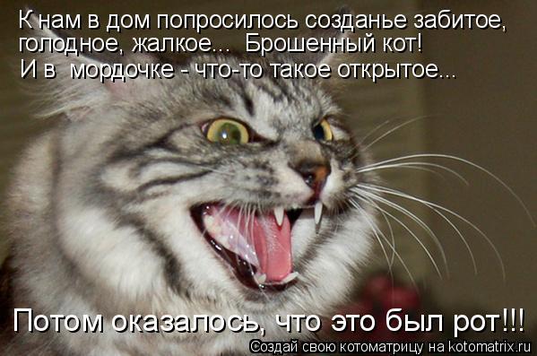 Котоматрица - К нам в дом попросилось созданье забитое, голодное, жалкое..…  Брошенн