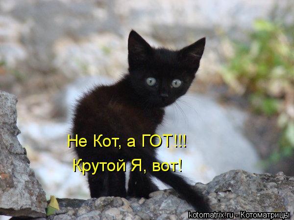 Котоматрица: Не Кот, а ГОТ!!!  Крутой Я, вот!