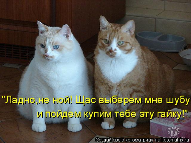 """Котоматрица: """"Ладно,не ной! Щас выберем мне шубу и пойдем купим тебе эту гайку!"""""""