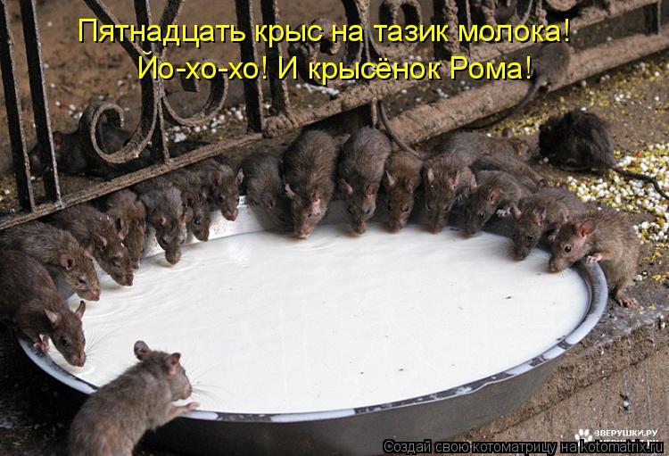 Котоматрица: Пятнадцать крыс на тазик молока! Йо-хо-хо! И крысёнок Рома!