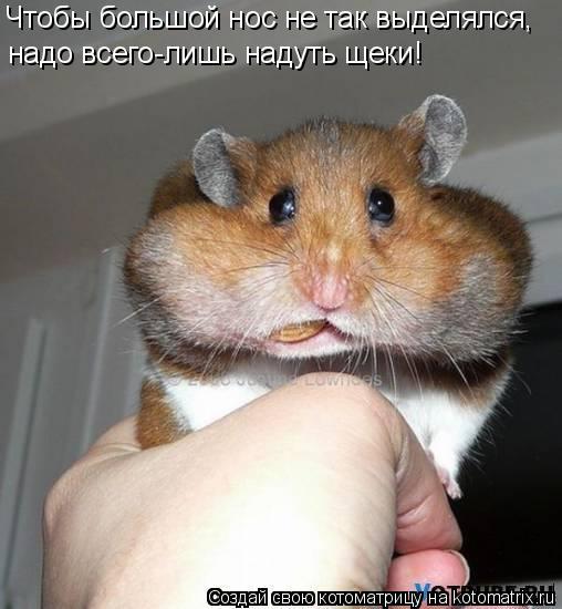 Котоматрица: Чтобы большой нос не так выделялся, надо всего-лишь надуть щеки!