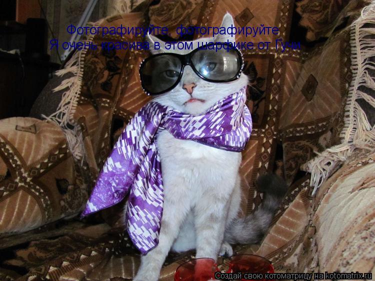 Котоматрица: Фотографируйте, фотографируйте Я очень красива в этом шарфике от Гучи