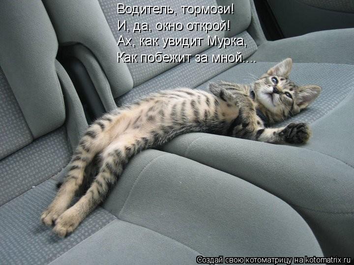 Котоматрица: Водитель, тормози!  И, да, окно открой! Ах, как увидит Мурка, Как побежит за мной....
