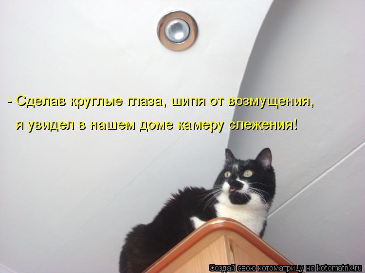 Котоматрица: - Сделав круглые глаза, шипя от возмущения, я увидел в нашем доме камеру слежения!
