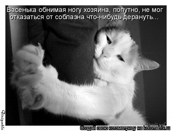Котоматрица: Васенька обнимая ногу хозяина, попутно, не мог  отказаться от соблазна что-нибудь дерануть...