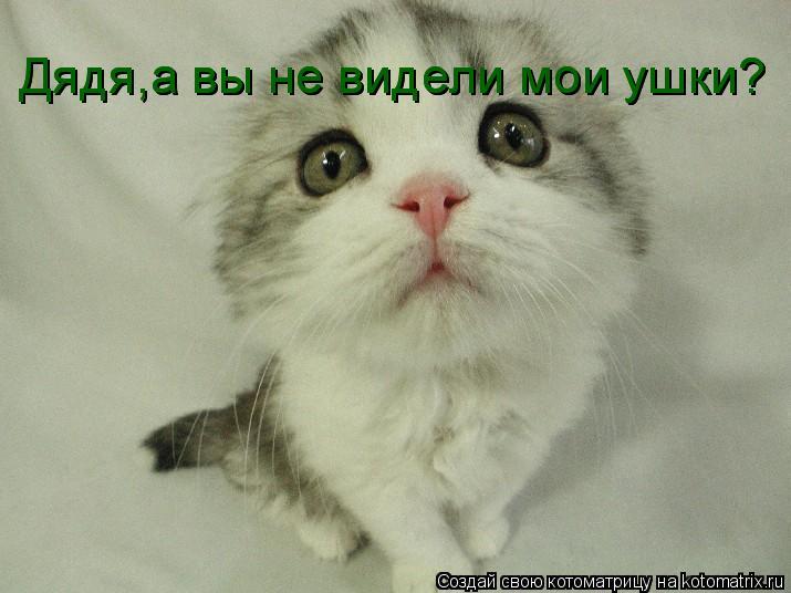 Котоматрица: Дядя,а вы не видели мои ушки? Дядя,а вы не видели мои ушки?