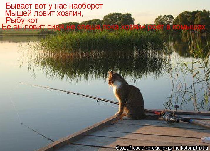 Котоматрица: Бывает вот у нас наоборот Мышей ловит хозяин, Рыбу-кот Ее он ловит сидя,не спеша,пока хозяин роет в комышах