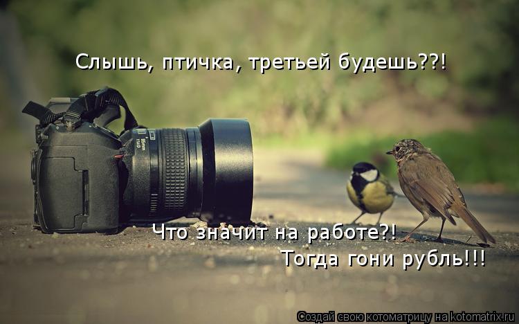 Котоматрица: Слышь, птичка, третьей будешь??! Что значит на работе?! Тогда гони рубль!!!