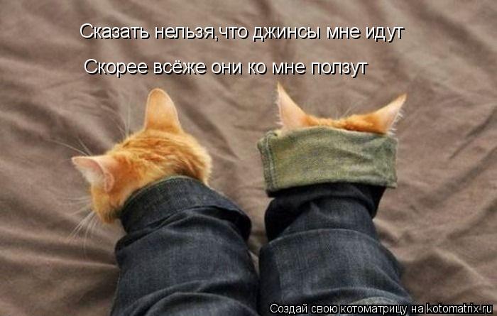 Котоматрица: Сказать нельзя,что джинсы мне идут Скорее всёже они ко мне ползут