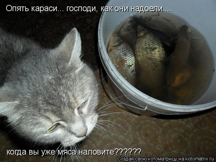 Котоматрица: Опять караси... господи, как они надоели.... когда вы уже мяса наловите??????