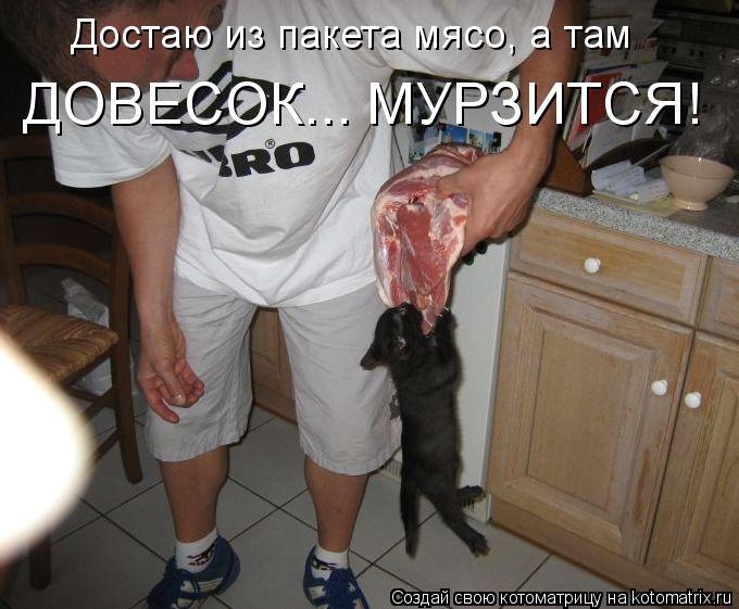 Котоматрица - Достаю из пакета мясо, а там  ДОВЕСОК... МУРЗИТСЯ!