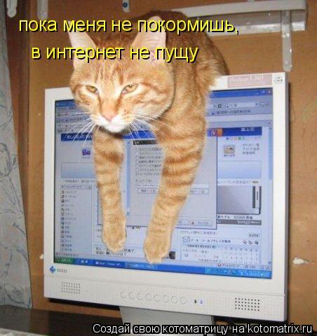 Котоматрица: пока меня не покормишь,  в интернет не пущу