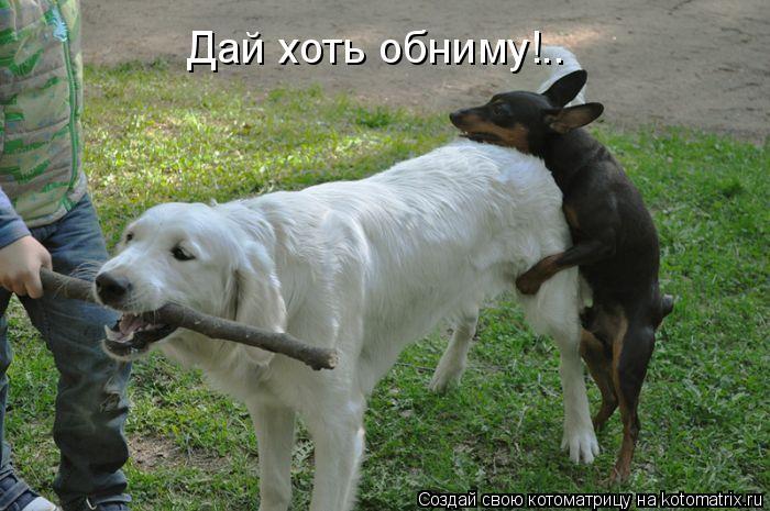 Котоматрица: Дай хоть обниму!..