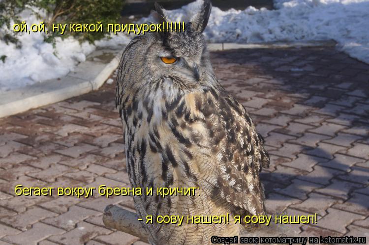 Котоматрица: ой,ой, ну какой придурок!!!!!!  бегает вокруг бревна и кричит: - я сову нашел! я сову нашел! - я сову нашел! я сову нашел!