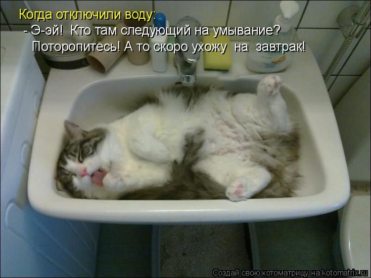 Котоматрица: Когда отключили воду:  - Э-эй!  Кто там следующий на умывание?   Поторопитесь! А то скоро ухожу  на  завтрак!