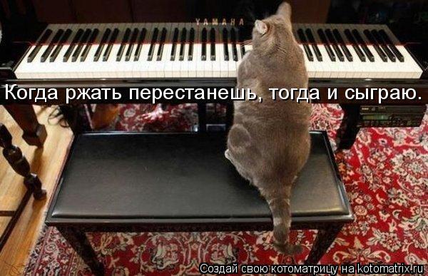 Котоматрица: Когда ржать перестанешь, тогда и сыграю.