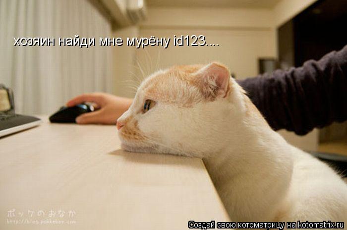 Котоматрица: хозяин найди мне мурёну id123....