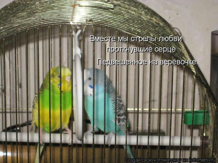 Котоматрица: Вместе мы стрелы любви проткнувшие серце Педвешенное на верёвочке.