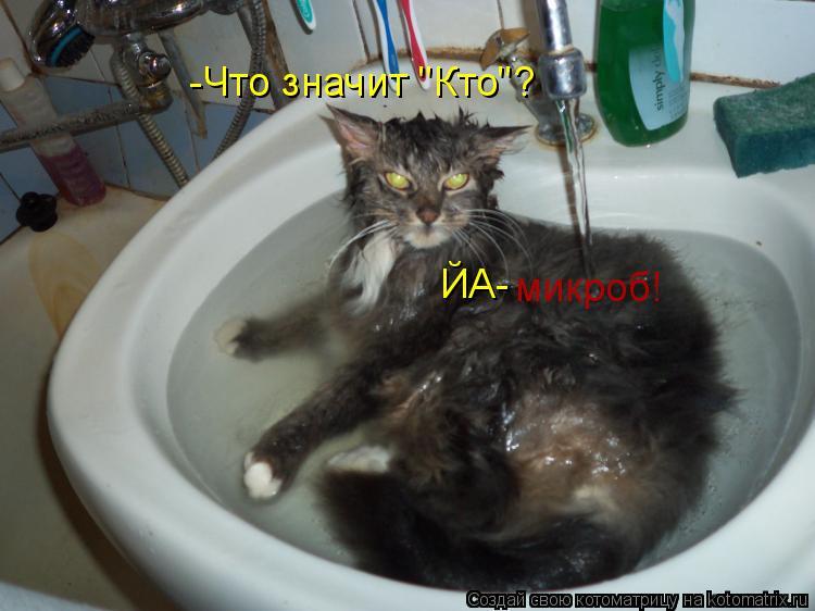 """Котоматрица: -Что значит """"Кто""""? ЙА- микроб!"""