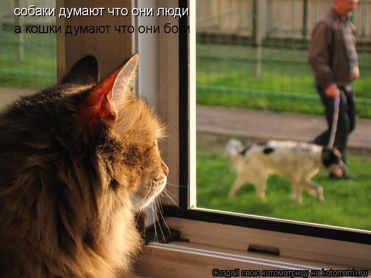 Котоматрица: собаки думают что они люди а кошки думают что они боги