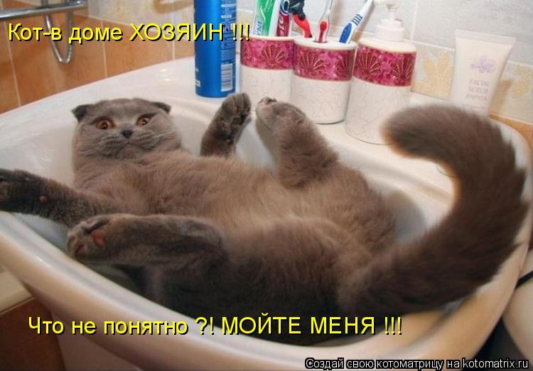Котоматрица: Кот-в доме ХОЗЯИН !!! Что не понятно ?! МОЙТЕ МЕНЯ !!!
