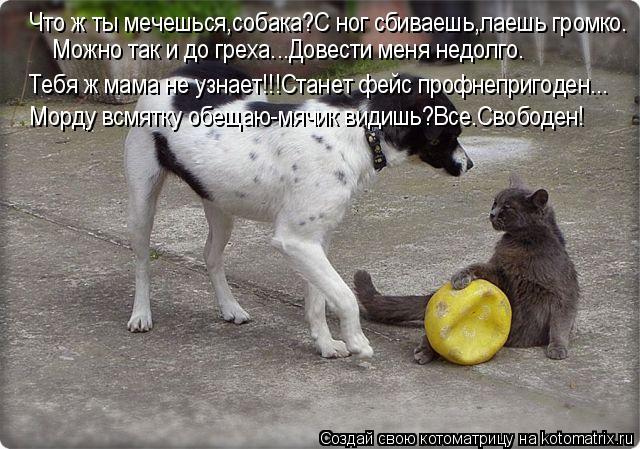 Котоматрица: Что ж ты мечешься,собака?С ног сбиваешь,лаешь громко. Можно так и до греха...Довести меня недолго. Тебя ж мама не узнает!!!Станет фейс профнепр