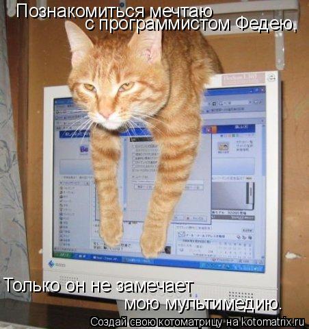 Котоматрица: Познакомиться мечтаю  с программистом Федею,  Только он не замечает  мою мультимедию.
