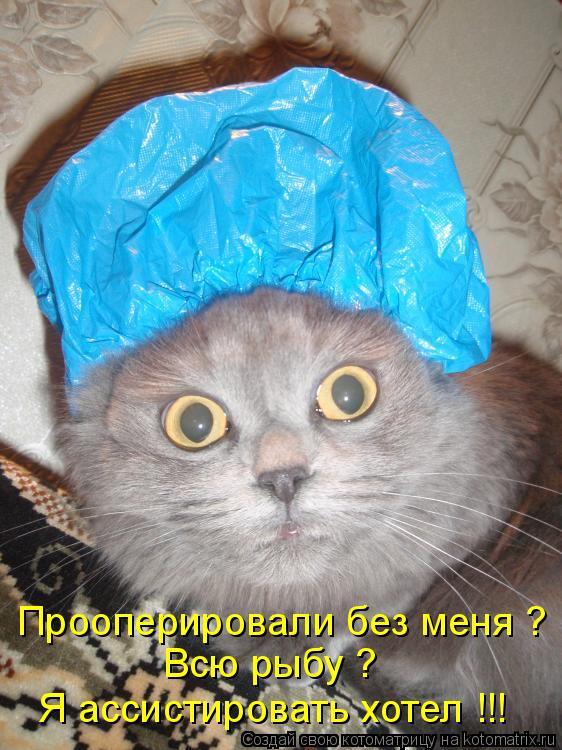 Котоматрица - Прооперировали без меня ? Всю рыбу ? Я ассистировать хотел !!!