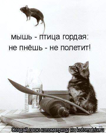 Котоматрица: мышь - птица гордая: не пнёшь - не полетит!