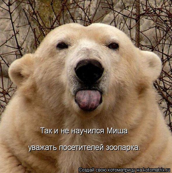 Котоматрица: Так и не научился Миша  уважать посетителей зоопарка.