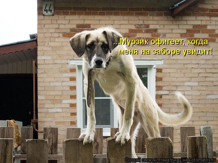 Котоматрица: ...Мурзик офигеет, когда меня на заборе увидит!